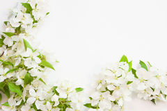 Background with the sprigs of flowering. Beautiful designer background with the sprigs of flowering apple-tree Royalty Free Stock Images