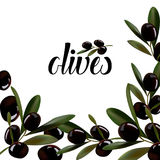Background of sprigs of olives. Stock Photos