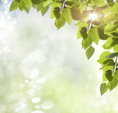 Background spring Royalty Free Stock Photography