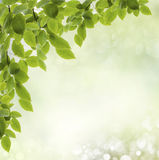 Background spring Royalty Free Stock Images