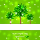 Background spring tree with green petals Royalty Free Stock Photo