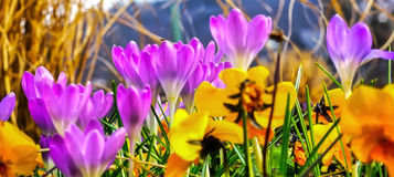 Background Spring Banner Royalty Free Stock Images