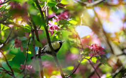 Background. Spring. The bird sits on a flowering branch. Royalty Free Stock Photo