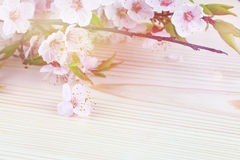 Background with spring blossom flowers. Royalty Free Stock Photography