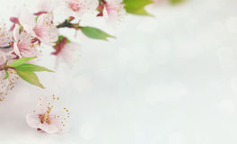 Background with spring blossom flowers. Stock Photos