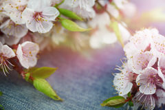 Background with spring blossom flowers.Jeans background with flo Stock Photo