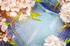 Background with spring blossom flowers.Jeans background with flo Stock Image