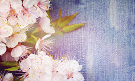 Background with spring blossom flowers.Jeans background with flo Royalty Free Stock Photo