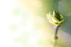 Background with spring bud Stock Photography