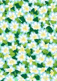Background of spring flowers Royalty Free Stock Photos