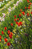 Background with spring flowers in garden Royalty Free Stock Photo