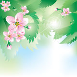 Background with spring flowers and  leaves Royalty Free Stock Photography