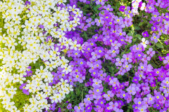 Background from spring flowers Stock Images