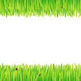 Background of spring grass Royalty Free Stock Photo