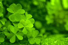 Background of spring leaves. Beautiful green spring leaves close-up Stock Photos