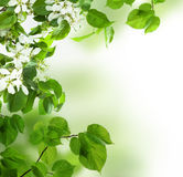Background, spring leaves and flowers Stock Photos