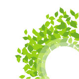 Background with spring leaves Royalty Free Stock Photos