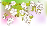 Background with spring tree branch. Colorful background with spring tree branch and white flowers Royalty Free Stock Photo