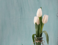 Background with spring tulips Royalty Free Stock Photos
