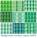 Background, Spruce Stock Photography