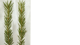 Background from spruce. For cards or website design Royalty Free Stock Photo