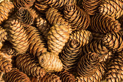 Background of spruce cones Royalty Free Stock Photos
