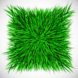 Background with square of grass Stock Images