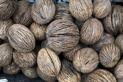 Background of stack of hairy brown coconuts. The Background of stack of hairy brown coconuts Stock Photos