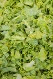 Slide green lettuce background. Background of stack slide lettuce vegetable for food cooking Stock Images