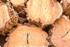 Background of stacked wood cut logs Stock Images