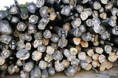 Background with stacked wood trunks Stock Photo