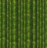 Background from  stalks of a bamboo Royalty Free Stock Photo