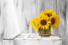 Background still life flower sunflower wooden white vintage Royalty Free Stock Photos