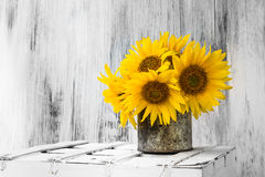 Background still life flower sunflower wooden white vintage Stock Photos