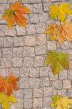 Background from  stone and leaf Stock Photo