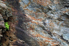 Background: stone multicolored rock Stock Image