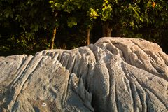Background stone pattern whtie and forest in asia sea Phuket Thailand Royalty Free Stock Photo