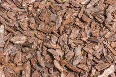 Background of the stones and bark Royalty Free Stock Photo