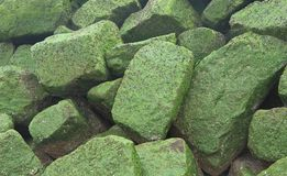 Background - stones covered by green sea grass. Background - natural stones covered by green seaweed Royalty Free Stock Images