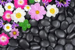 Background with stones and flowers Stock Images