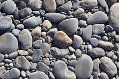 Background of stones. Pebble. Stock Photography
