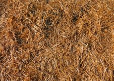 Background of straw and dry hay. In the stable Stock Photo
