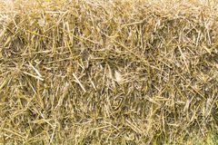 Background of straw royalty free stock photography