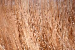 Background a structure - a dry grass Stock Photo