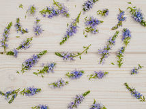Background in the style of Provence. Delicate blue cornflowers and white wood Royalty Free Stock Photography