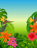 Background with stylized tropical plants, leaves and flowers. Image for advertising booklets, banners, flayers, cards Stock Photos