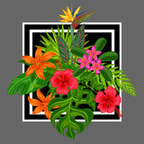 Background with stylized tropical plants, leaves and flowers. Image for advertising booklets, banners, flayers, cards Royalty Free Stock Photography