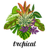 Background with stylized tropical plants and leaves. Image for advertising booklets, banners, flayers, cards, textile Royalty Free Stock Photography