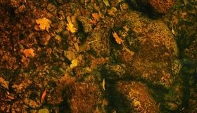 Background the substrate fall under water. It is beautiful though corny leaves fell into the water the background is the substrate fall under water Stock Photography