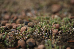 Background of the succulent plant on eco roof Stock Images